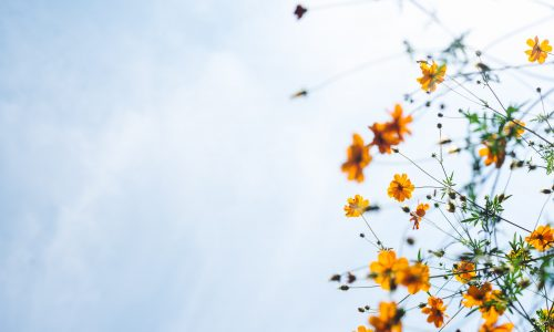 orange flowers against sky