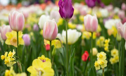 spring flowers growing