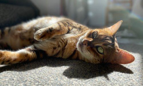 cat lounging in sun