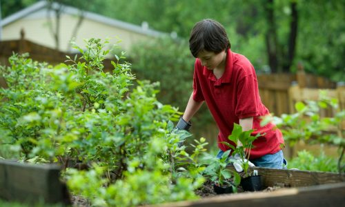 Boy in red shirt gardening