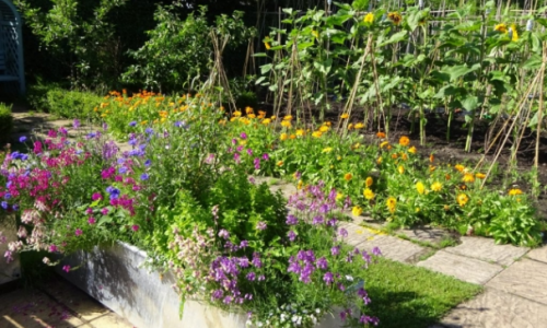 Therapy Garden Surrey